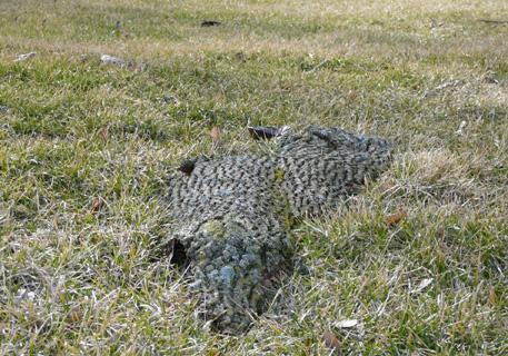 Is het een rots? Is het een boom? Is het een alligator?